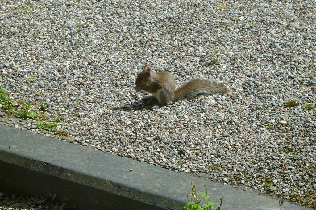 Squirrel by Front Door & Squirrel by Front Door | Cae\u0027r Blaidd Country House