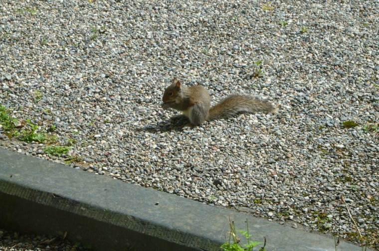 Squirrel by Front Door